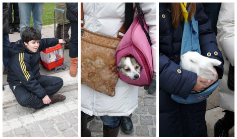 a rabbit trolley, dog and rabbit pouches