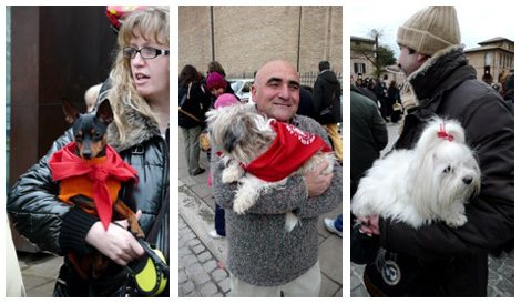 pets on the way to blessing