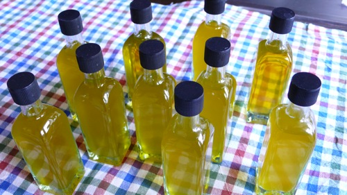 our baby production of wonderful Extra Virgin Umbrian olive oil