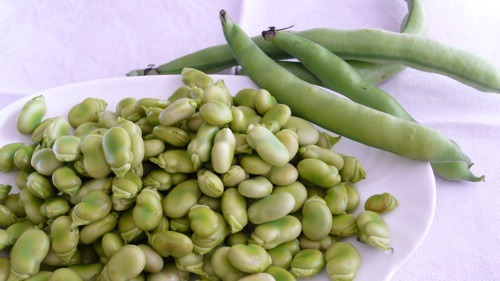 tender broad beans, a spring delicacy