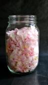 delicate wild roses petals