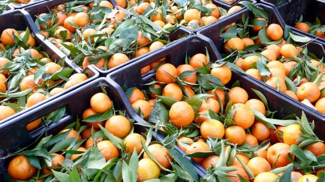 oranges at Italian market