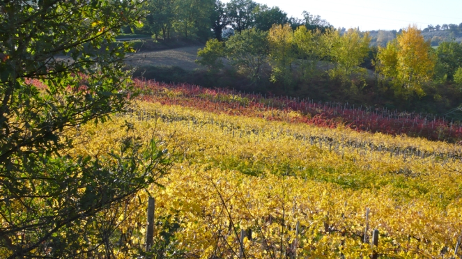 Umbrian vineyards in the fall