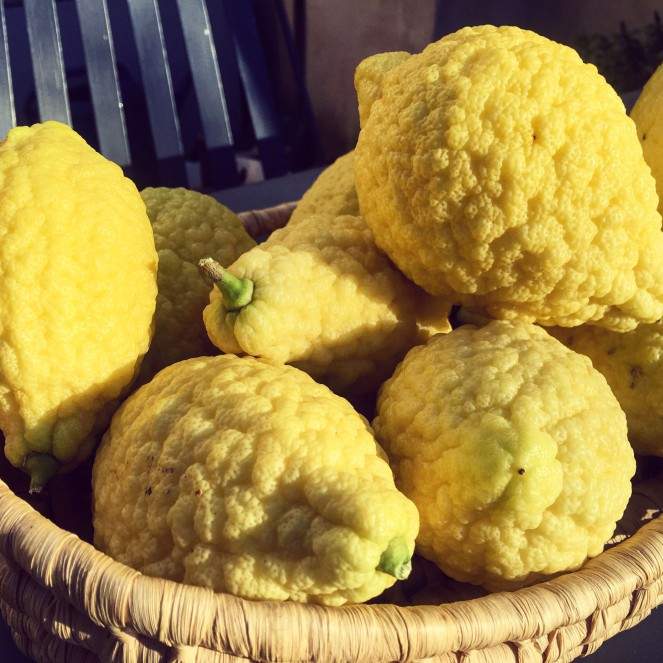 Sicilian Citron is a citrus used for candied fruit