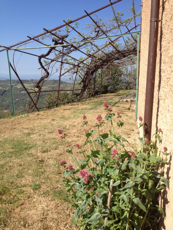 alla Madonna del Piatto Agriturismo in Umbria garden